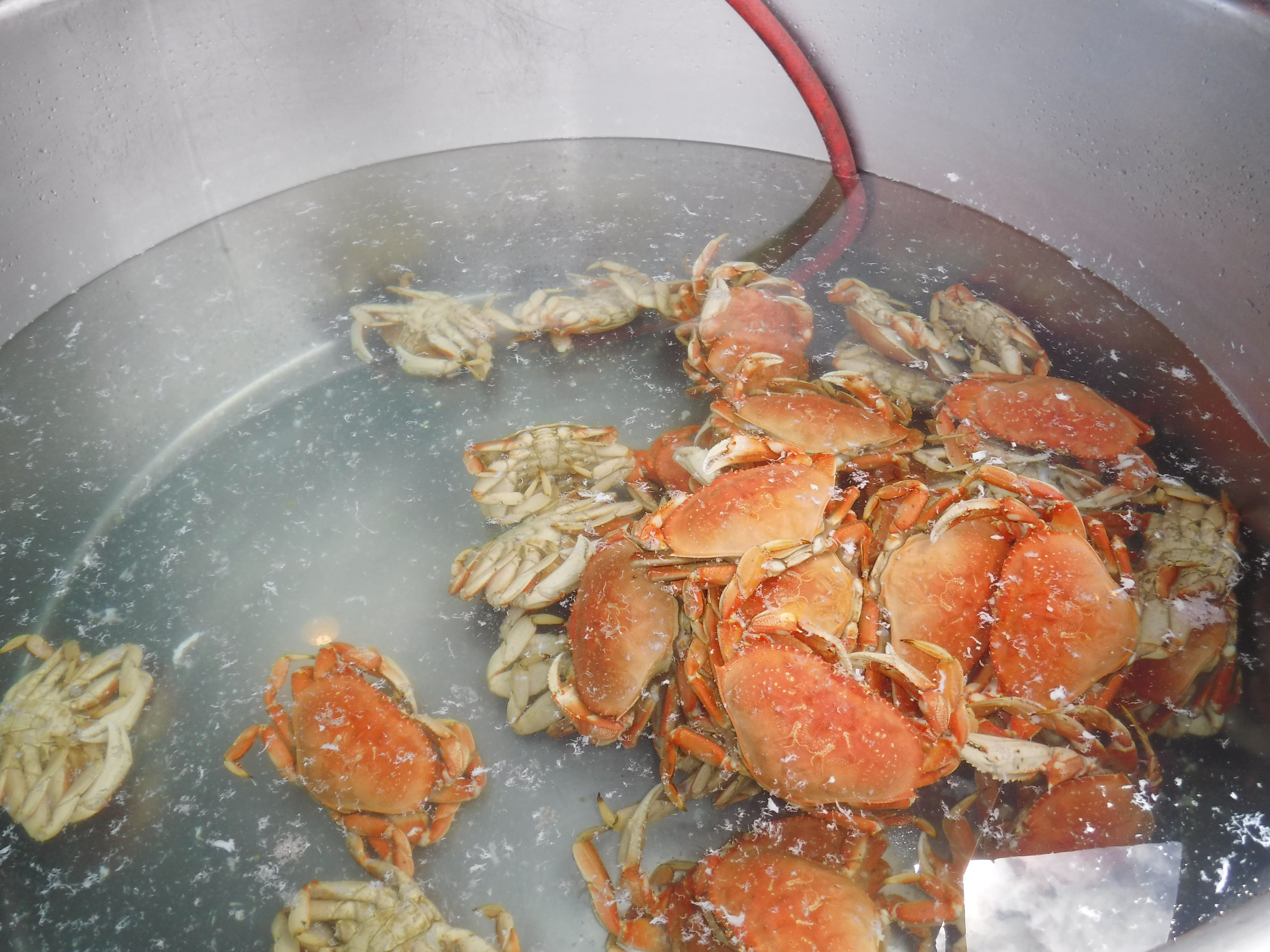 red krab Cooking, Food, Mouse pictures