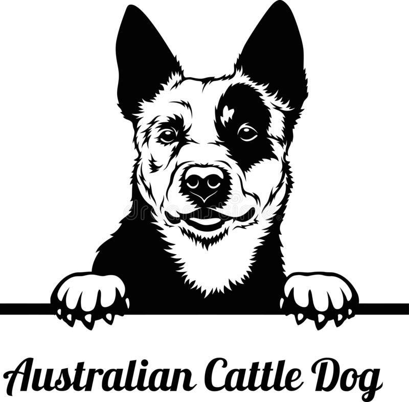Australian Cattle Dog - Peeking Dogs - Breed Face