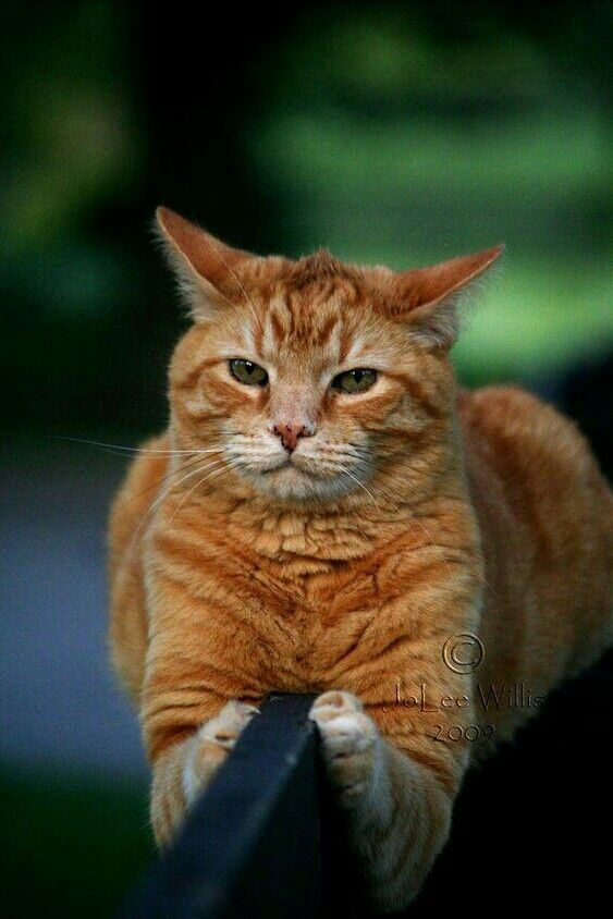 Image by Roaring M€g on Ground Control to Ginger Tom