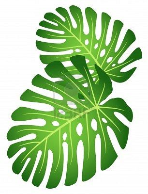 tropical leaves plants,flowers,forest Pinterest Leaves - editable leaf template