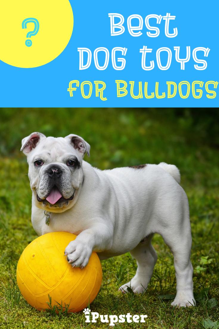 Best Dog Toys For Bulldogs Best Dog Toys Smart Dog Toys Dog Toys