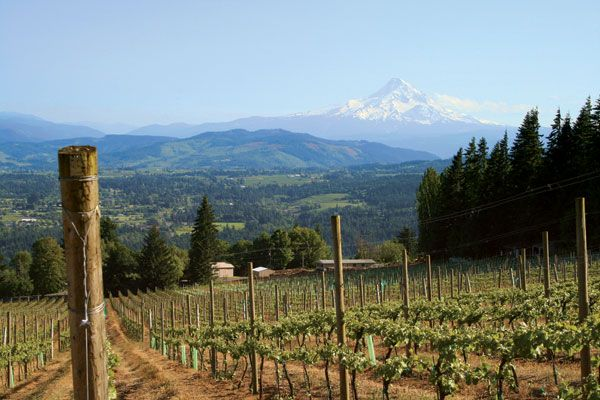 Cathedral Ridge Winery - Making its mark on the stunningly