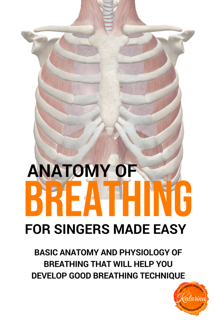 Anatomy of Breathing for Singers Made Easy | Breathe, Anatomy and ...