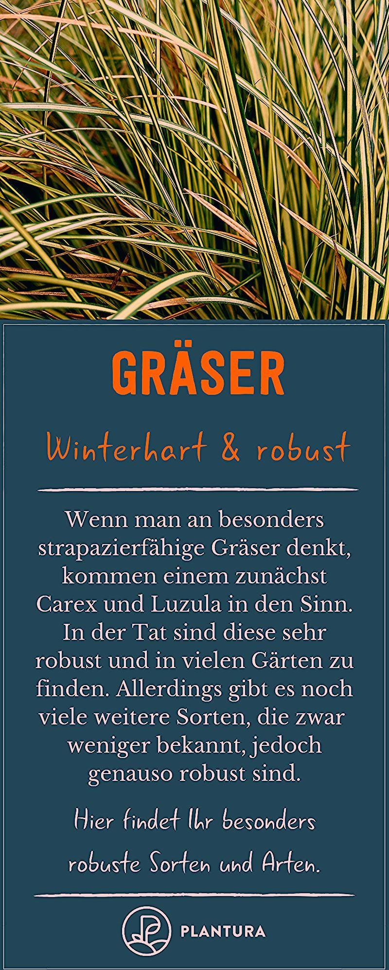 Photo of Winterharte Gräser: Sortenwahl & richtige Pflege – Plantura