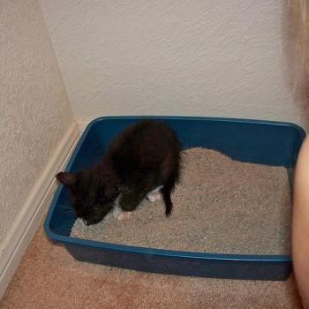 How to Clean a Cat Litter Box Cat litter box, Litter box