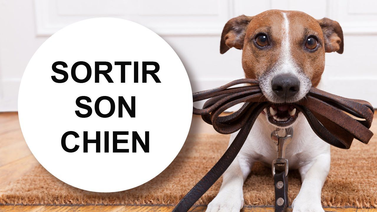 Tutoriel éducation canine : Sortir son chien sans qu'il