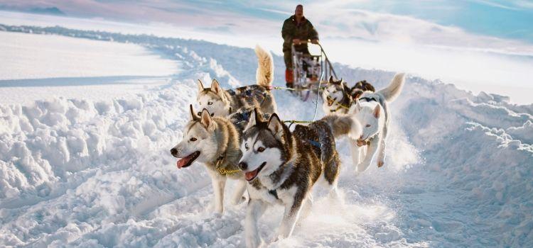 Trineo perros husky viaje laponia semana santa
