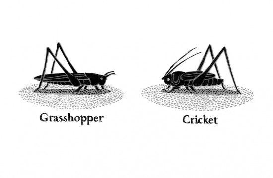 A Bug/Insect Unit Using Eric Carle Books ~ The Very Quiet Cricket ...