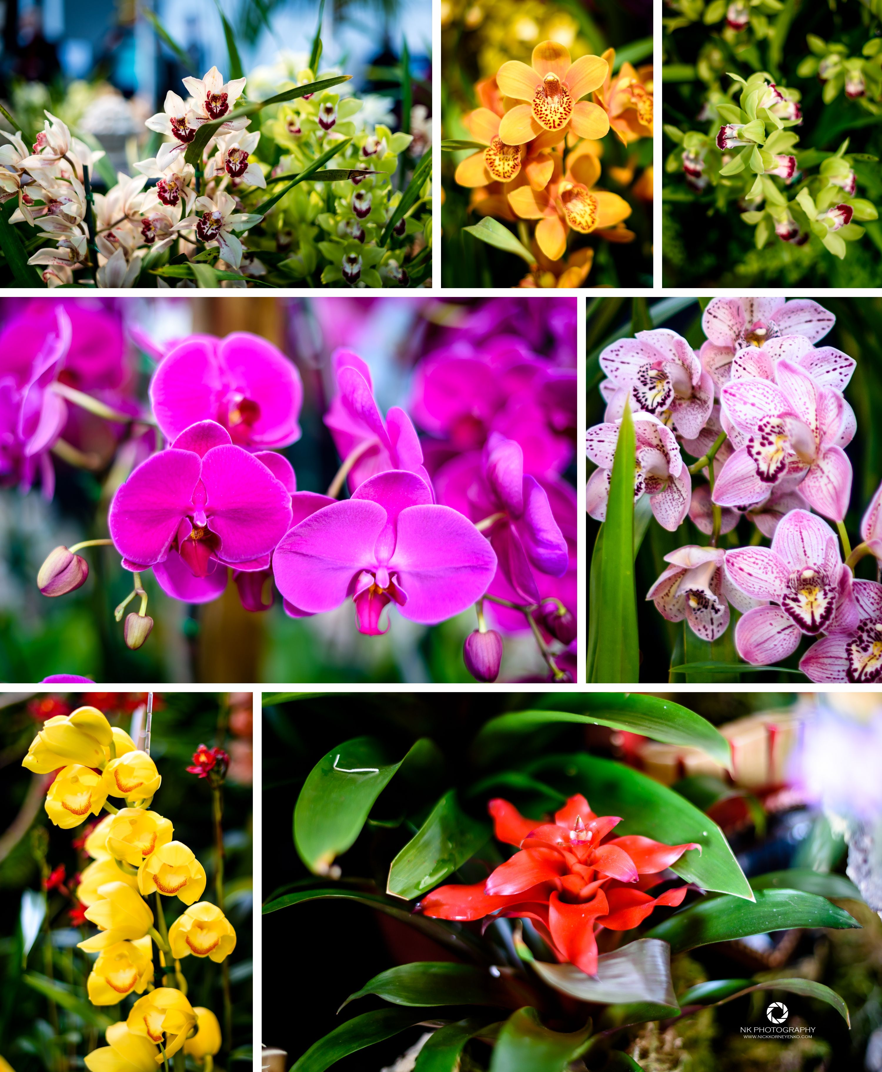 64th Annual Pacific Orchid Exposition A Legacy Of Orchids Over