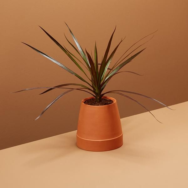 stylist design house plant seeds. Boskke  beautiful functional urban gardening products Flipped Going Green Pinterest Urban