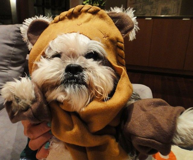 star wars ewok dog costume ewok dog costume ewok and dog. Black Bedroom Furniture Sets. Home Design Ideas
