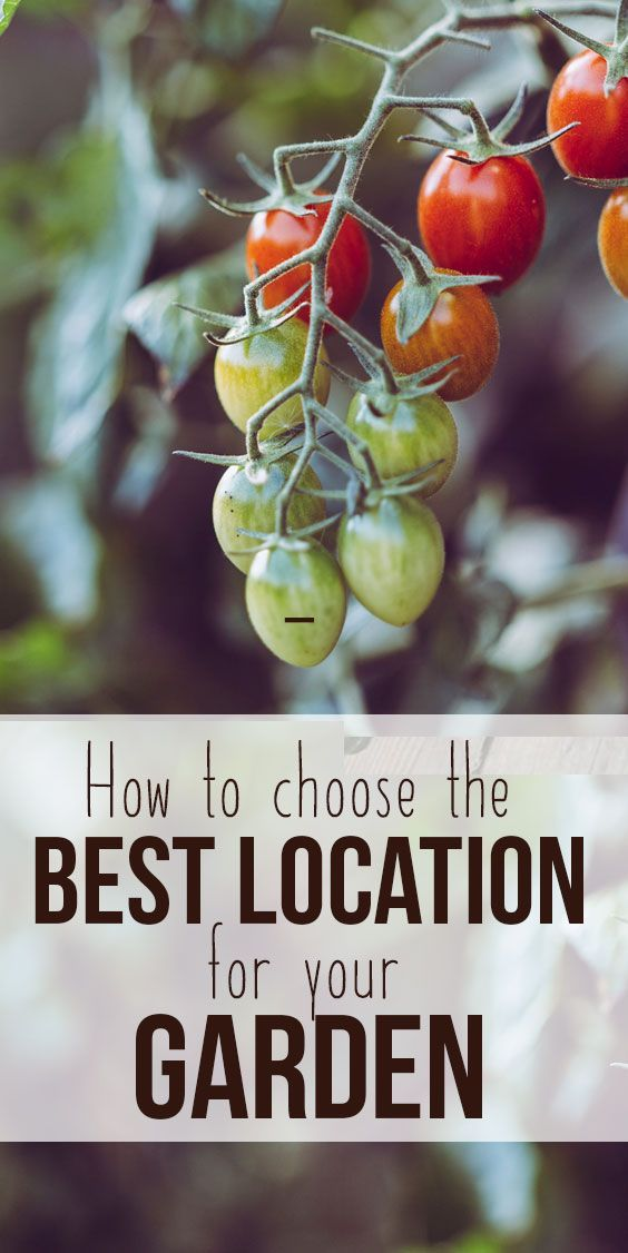 Choosing the Best Location for your Garden, Orchard or ...