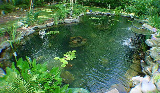 Estanque para peces nitrivec clarificador de agua Estanques