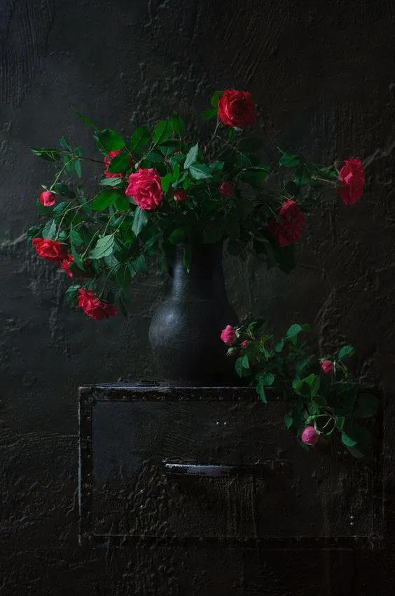 خلفيات ورد ملونة 2020 اجمل صور ورد 2021 فوتوجرافر Flowers Photography Flower Art Flower Painting