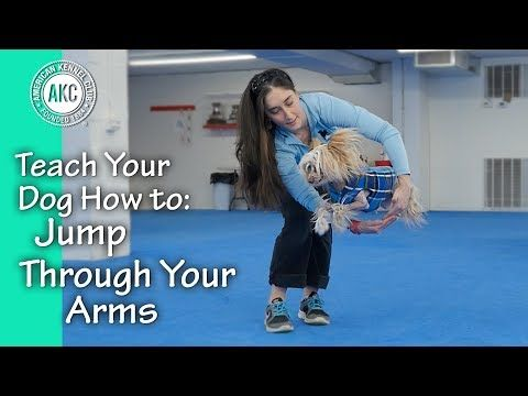 How To Teach A Dog To Jump Through Your Arms Google Search
