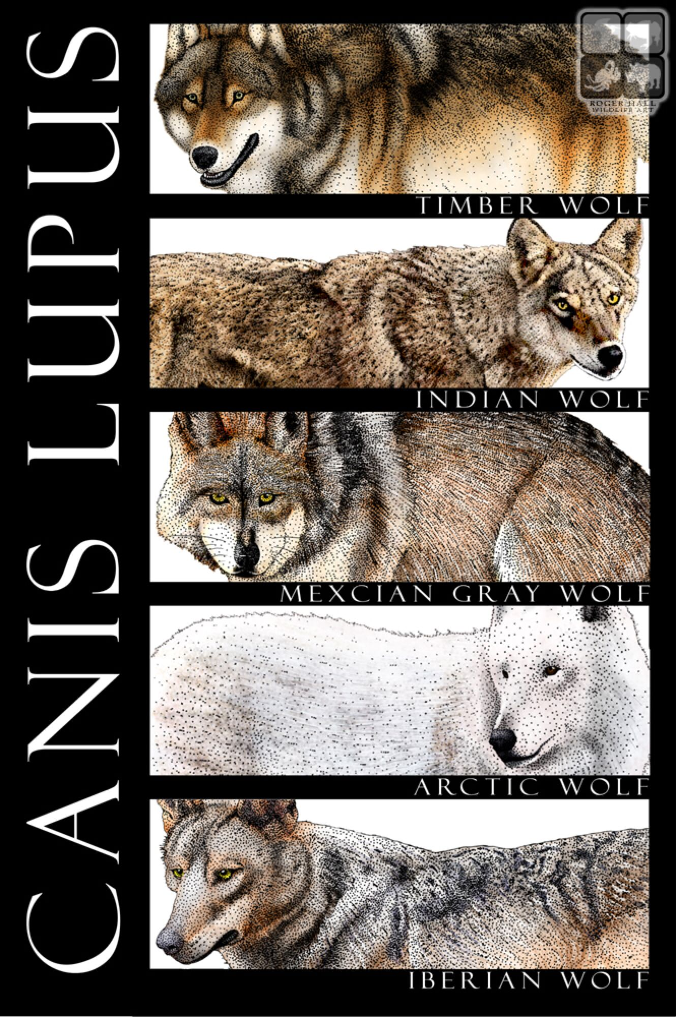 Wolves of the World by rogerdhall on @DeviantArt | Wolf, Types of wolves,  Wolf dog