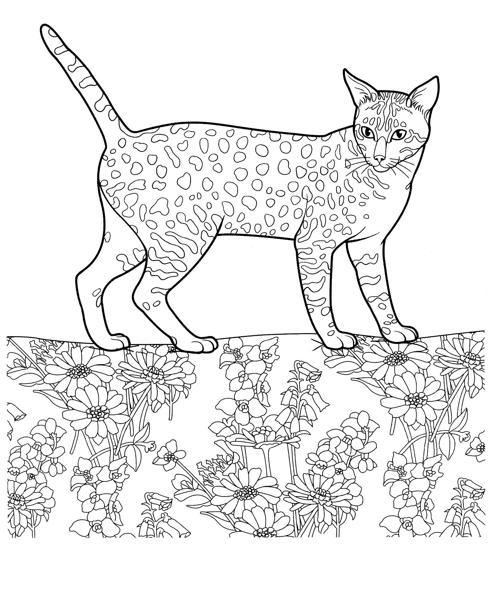 Cat 25 Cats Coloring Pages For Teens And Adults Cat Coloring