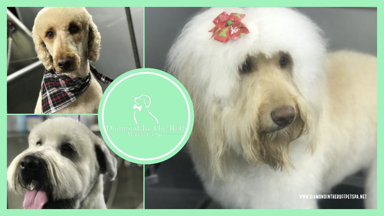 Follow Us On Facebook Instagram We Are A Mobile Dog Grooming