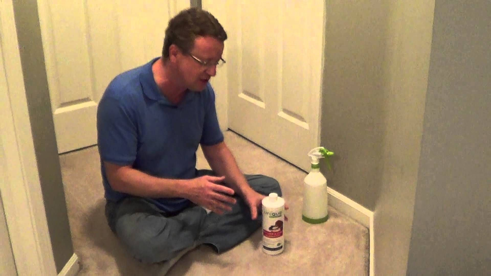How To Clean Cat Urine From Carpet Dry Carpet Cleaning