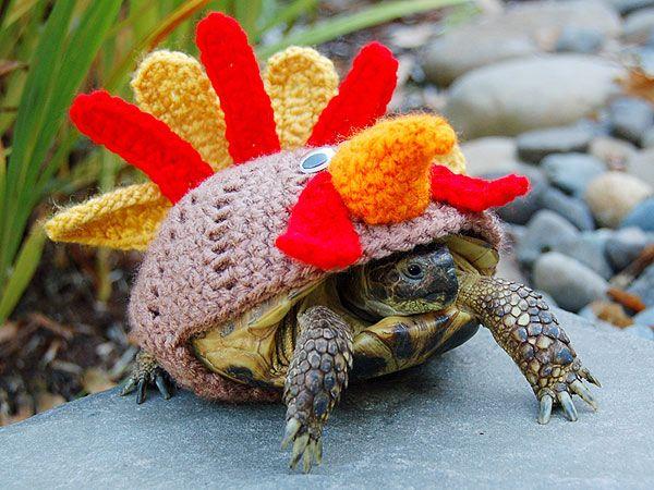 Image result for turtle turkey