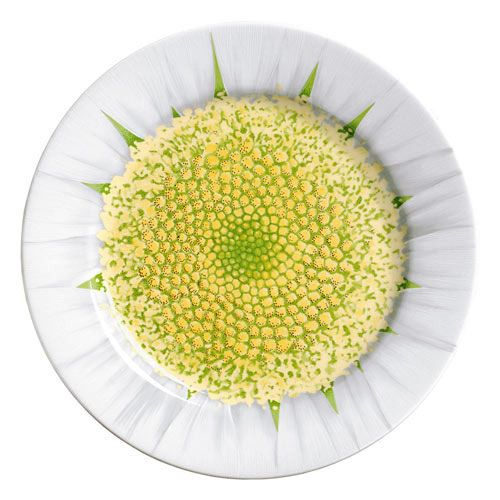 Taitù Milano - 'L'Erba del Vicino' Collection - Salad Plate