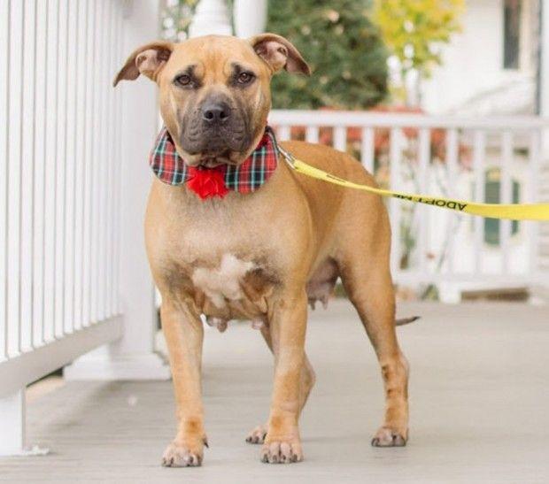 Dog Was Abused Abandoned Dogs Lap Dogs Abandoned