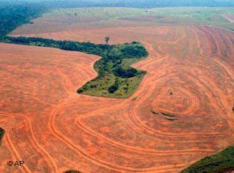 Int 2 Homework For 24 08 10 Deforestation Rainforest