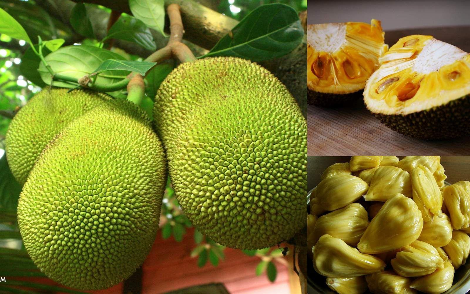 данный все фрукты мира с названиями и картинками искусственной среде фотобиореактора