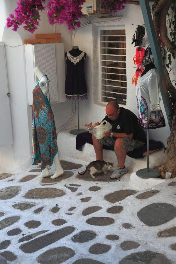Local feeding stray Mykonos Cats Greece Home decor
