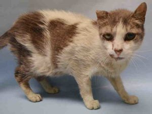 8 / 13 /16 URGENT - Benzo  A 1083868 - HAS POSS URI - GERIATRIC - DEHYDRATED - UNDERWEIGHT -10 YRS OLD NEEDS OUT NOW