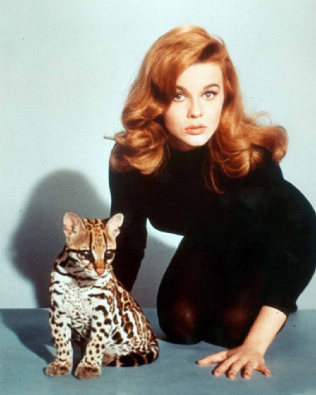 35 8 M Gostos 168 Comentarios History In Pictures Historyphotographed No Instagram Ann Margaret And An Ocelot Ci In 2020 Ann Margret Classic Beauty Cat People