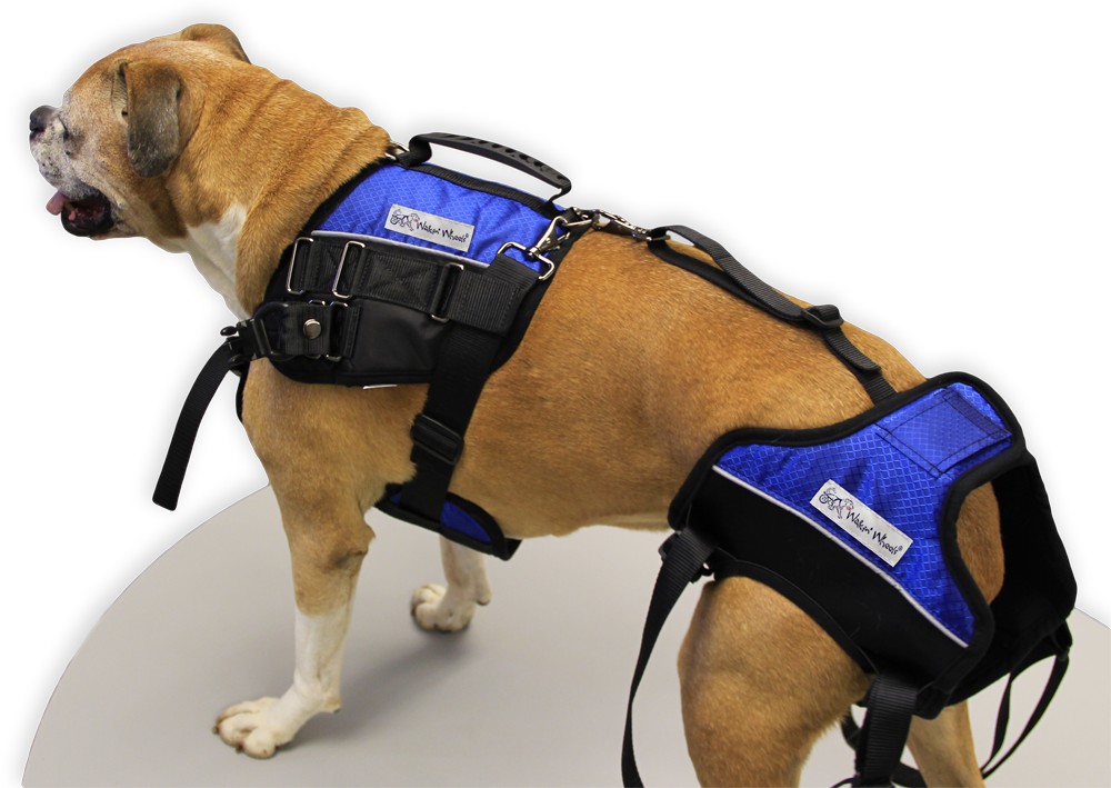 Walkin' Lift Combo Dog Harness | Complete Lifting Harness for Dogs