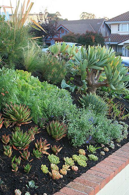 Initial Planting Of Succulents By David Feix Landscape Design, Via Flickr