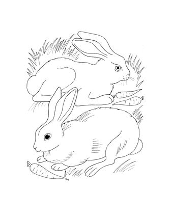 Rabbits Eating Carrots Coloring Page Supercoloring Com Coloring Pages Rabbit Eating Carrot Drawing