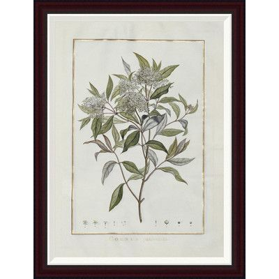 Global Gallery Cornus by Charles-Louis L'Heritier De Brutelle Framed Painting Print Size: