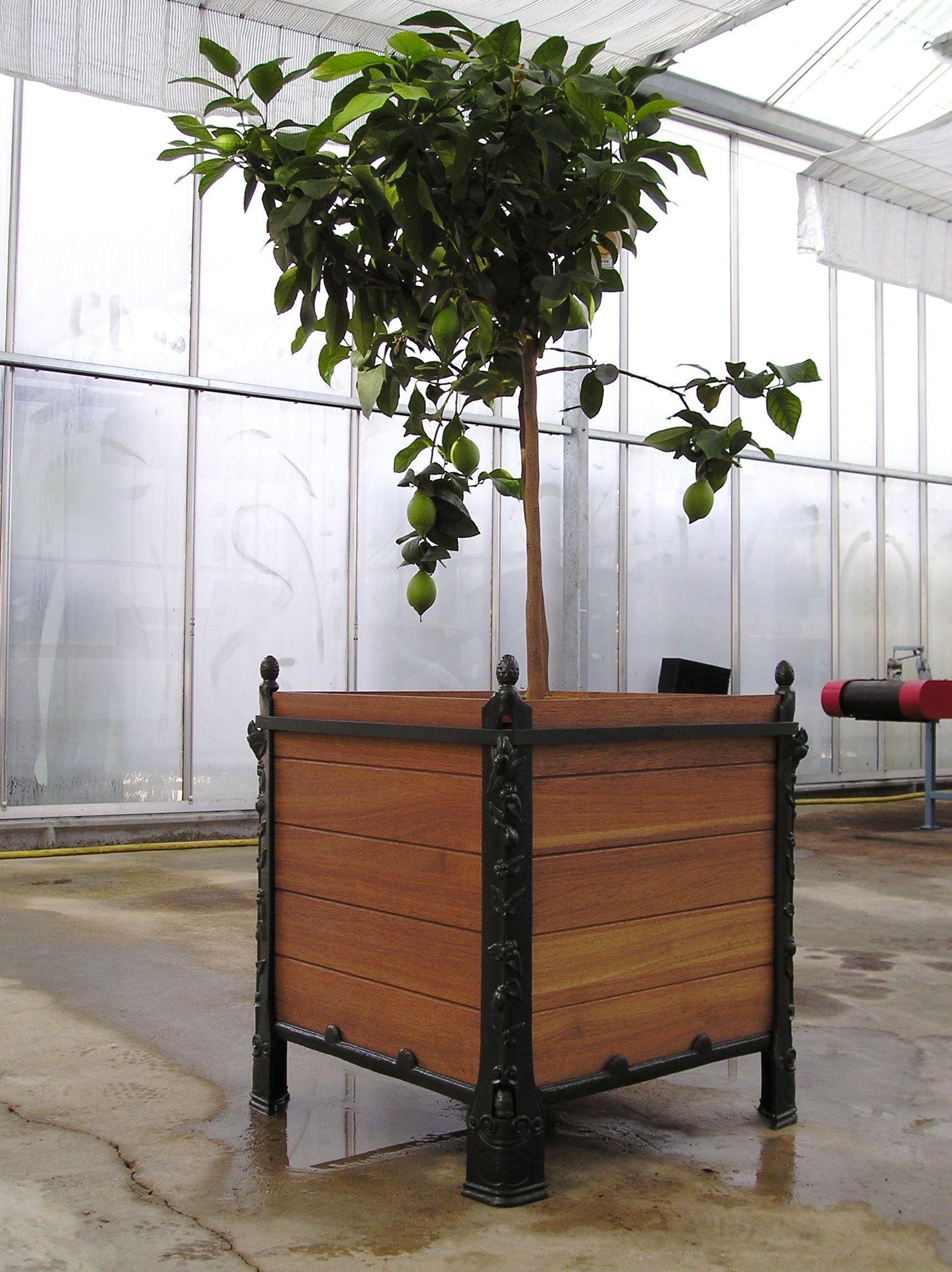 Bac Pour Arbuste De Jardin bac a oranger - panneaux bois - bac à plantes - jardinière
