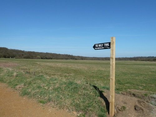 Epping Forest Favourite Family Walking Route Start of The Holly Trail
