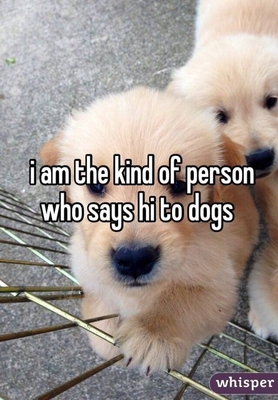 Can't help myself, I say hi to dogs and if possible pet them. Talk ...
