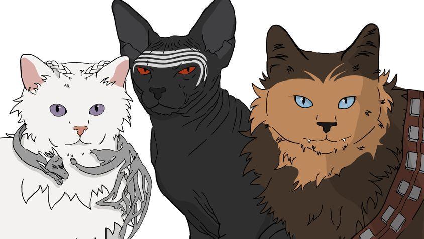 nerdy cat names