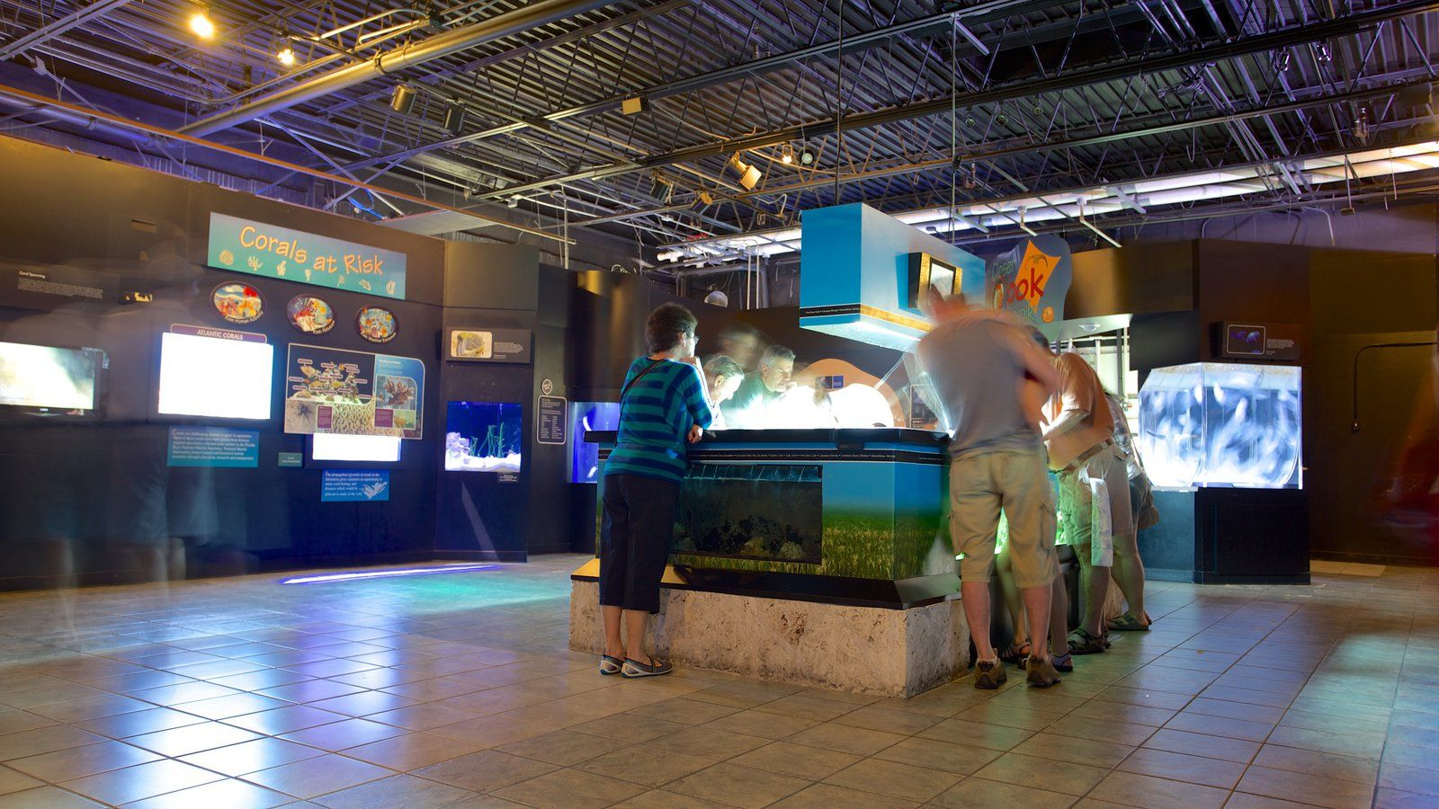 Mote Marine Aquarium Showing Interior Views And Marine Life
