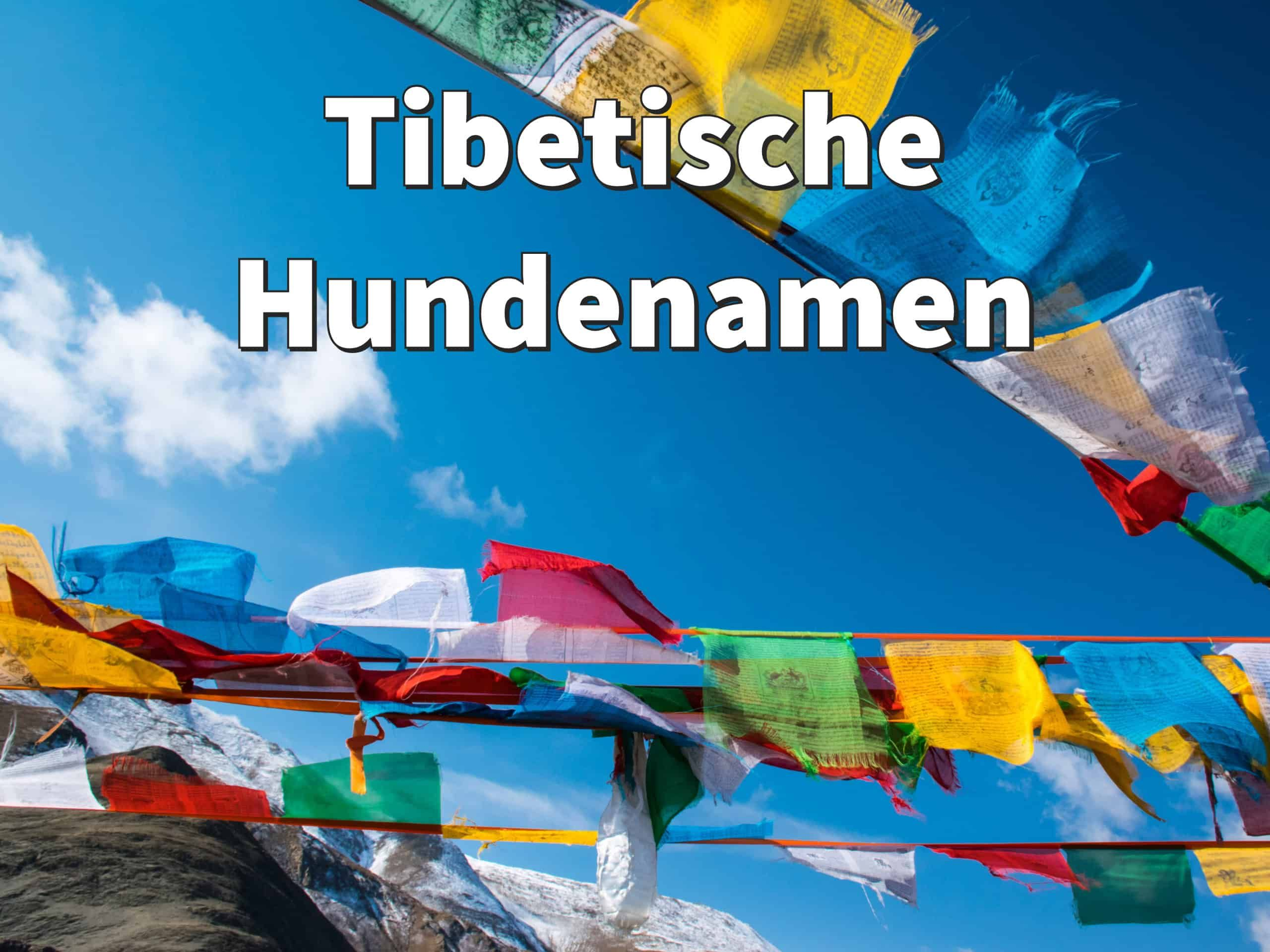 Tibetische Hundenamen Mit Bedeutung Weibliche Und Mannliche Namen Hundenamen Hunde Und Mannliche Namen