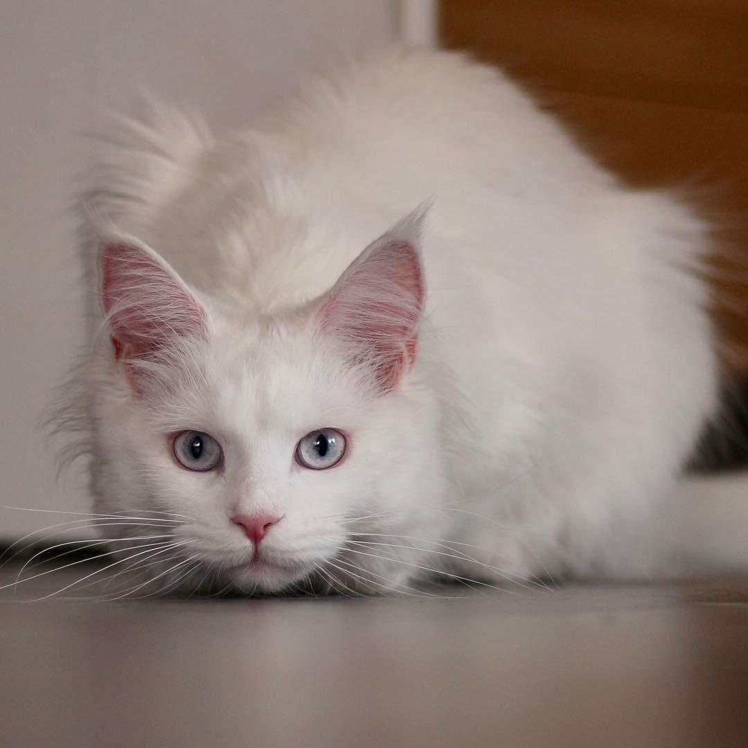 Gambar oleh инна pada кошки и собаки породистые знаменитые 1