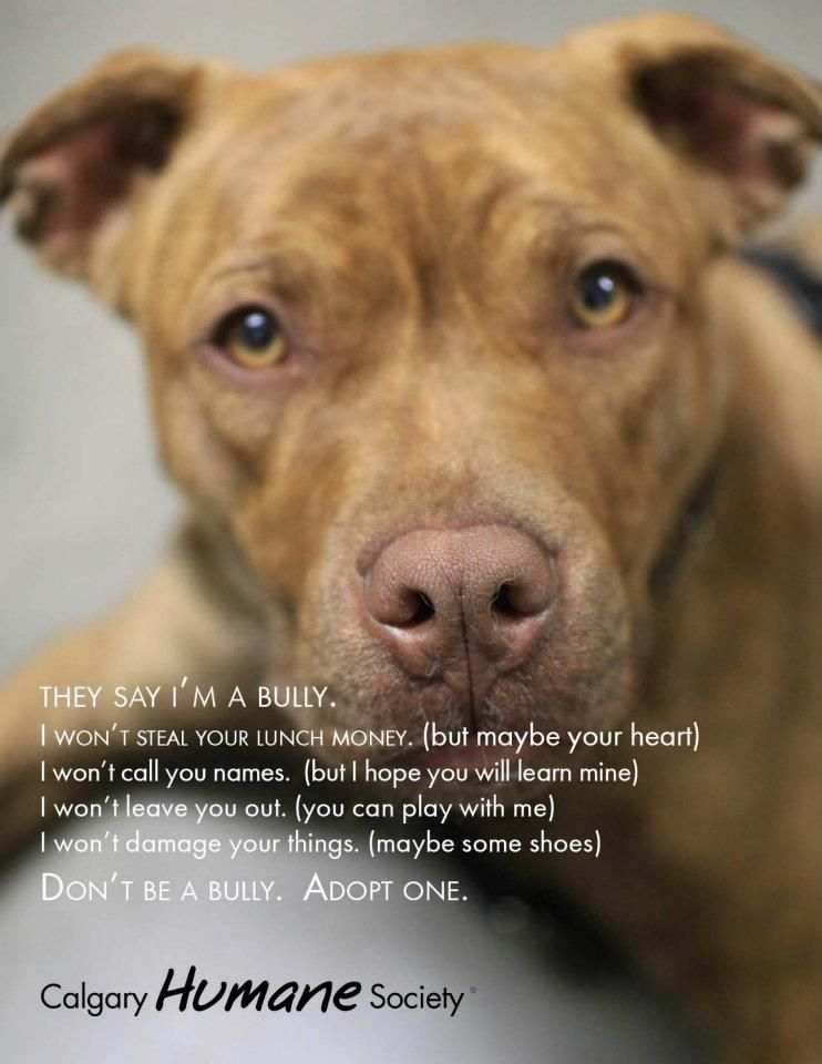 From the Calgary Humane Society's FB page  :)   Pitties