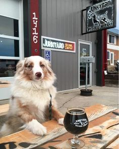 6 Minnesota Hikes & Breweries You and Your Dog Will Love