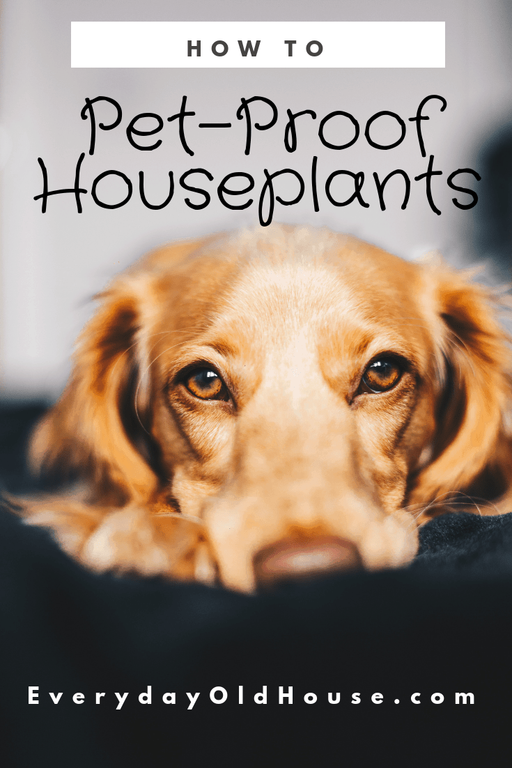 Does Your Pet Dig In Your Houseplants Learn How To Diy Pet Proof And Childproof Houseplants For Around 10 Dogdigs Houseplant Pets Dog Training Pet Travel