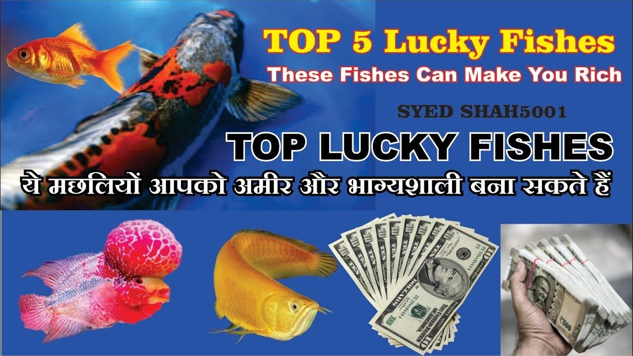 Top 5 Lucky Fishes To Have In Our Home To Get More Wealth And Health Fi Fish How To Get Rich Lucky
