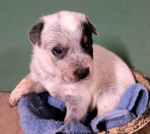 Pet Profile Pet Adoption Dog List Pets