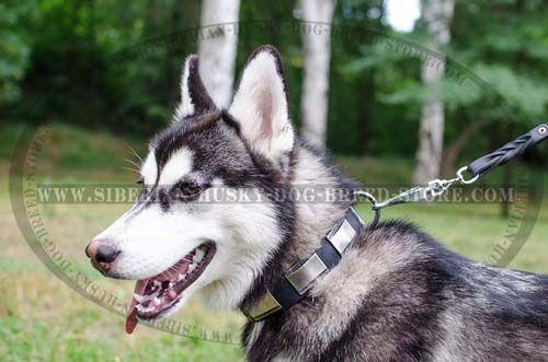 Designer Dog Collar For Siberian Husky Leather Custom Collar