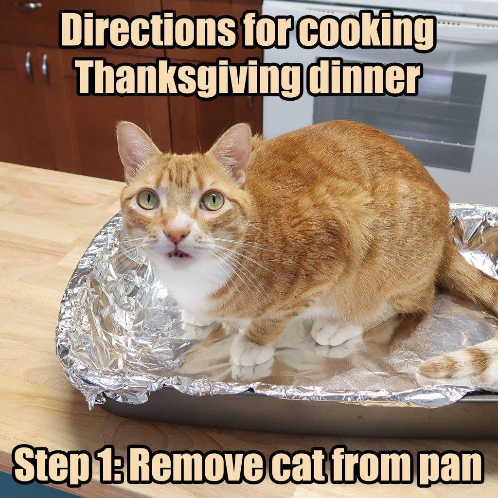 Pin By Pam Sweet P Davis On A Little Laugh Cats Cat Memes