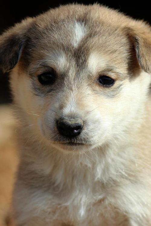 Cute Dog by Ibrahim Abu Mazna